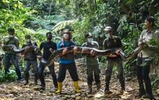 24h qua ảnh: Bắt được trăn khổng lồ dài 9m ở Indonesia