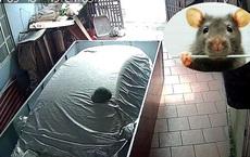 """Chủ xe chống chuột cẩn thận như """"gói quà"""", CĐM thi nhau đặt gạch: 'Lúc nào bác bán xe thì ới em'"""