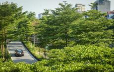 Nóng: Bắt tạm giam 3 giám đốc, phó giám đốc liên quan đến vụ nâng khống cây xanh ở TP Hà Nội gây thiệt hại hàng chục tỷ đồng