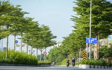 Dự án 1 triệu cây xanh do ông Nguyễn Đức Chung khởi xướng: Bất ngờ về con số thiệt hại và dàn lãnh đạo bị bắt trong hơn 2 tháng