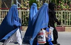 Taliban sẽ tạm thời áp dụng hiến pháp quân chủ, trao quyền cho phụ nữ