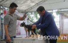 """Vui nhộn với cuộc thi """"hoa hậu"""" chó quốc tế ở TP. HCM"""
