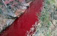 Biên giới Hàn-Triều: Máu nhuộm đỏ sông vì tiêu hủy lợn, dân cư không chịu nổi mùi hôi thối nồng nặc