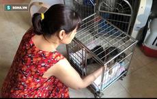 """Người phụ nữ sống cùng hơn 40 con mèo bị bỏ rơi ở Hà Nội: """"Nhiều người bảo tôi là dở hơi đấy"""""""