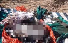 Phát hiện thi thể bé trai sơ sinh tại bãi rác