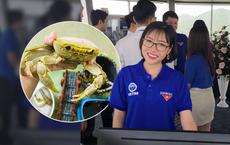Quá trình nuôi cua đá như thú cưng của cô gái Nam Định: 2 lần thoát khỏi nồi đã thành cái duyên