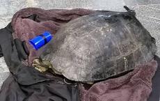 Một người đàn ông bắt được con rùa nặng 10Kg ở hồ Gươm