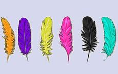 Chọn một sợi lông vũ bạn thích nhất để tìm ra cả ưu điểm lẫn nhược điểm của bản thân