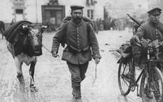 Tha chết cho 1 con bò già, tướng lĩnh quân đội Đức sống sót thần kỳ trong Thế chiến thứ 2