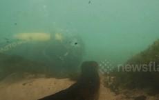 Khoảnh khắc kinh hoàng khi thợ lặn đối mặt với trăn khổng lồ dưới sông ở Brazil