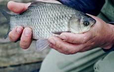 Mất đi nhẫn kim cương và túi vàng, người đàn ông bỗng tìm lại được tất cả khi mua 1 con cá