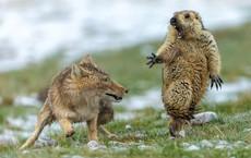 15 bức ảnh động vật hoang dã đẹp nhất năm 2019