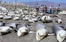 Đại dương ra sao nếu 'Quái vật biển khơi' tuyệt chủng?
