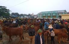 Ghé chợ trâu bò lớn nhất Đông Nam Á ngày cận Tết