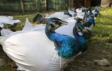 """Dịch COVID-19 hé lộ quy mô """"khủng"""" của các trang trại động vật hoang dã ở Trung Quốc"""