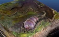 Sinh vật chỉ 'ăn và ị' này có thể chính là tổ tiên lâu đời nhất của con người