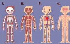 Bạn thấy bộ phận nào trên cơ thể cần thiết nhất cho sự sống? Đáp án rất bất ngờ