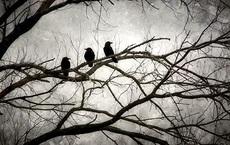 """Quạ bố hỏi quạ con,""""Thứ gì đáng sợ nhất trên đời?"""" và 3 đáp án khiến nhiều người phải suy ngẫm"""
