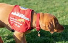 """""""Ngửi"""" được bệnh ung thư, sốt rét và Parkinson: Chó có thể phát hiện người nhiễm COVID-19 hay không?"""