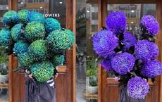 """Hoa cúc xanh khổng lồ đắt gấp 20 lần so với hàng chợ có gì đặc biệt mà gây """"sốt""""?"""