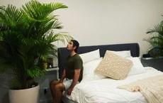 Anh chàng khổ vì vợ thích cây cảnh cỡ lớn, giữa đêm phải bê ra khỏi phòng ngủ bởi lý do khó ngờ