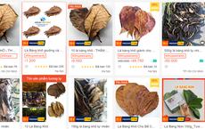 Chuyện thật như đùa, lá bàng khô được rao bán rầm rộ, giá 1.000 đồng/lá