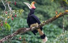 """Phượng hoàng đất - loài chim """"đẹp như mơ"""" bay lạc vào vườn của chàng trai trẻ"""