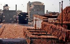 """Ấn Độ xua đuổi và tiêu diệt hàng trăm triệu con châu chấu bằng """"đòn chí mạng"""" vào điểm yếu không ngờ"""