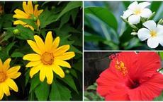 6 loài hoa tuyệt đối không bày trong nhà và trên ban thờ kẻo tán tài tán lộc