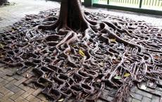 19 bức ảnh khẳng định cỏ cây có sức sống mãnh liệt bất chấp nghịch cảnh