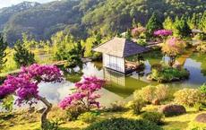 Nhiều loài hoa dại thành bonsai trăm triệu ở Đà Lạt