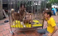 Con trai Bà Tân Vlog gây tranh cãi dữ dội khi nhốt em gái vào chuồng chó để trả thù