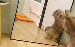 """""""Trong gương là yêu quái nào kia?"""": Khoảnh khắc boss nổi điên khi lần đầu nhìn thấy chính mình khiến dân mạng cười lăn cười bò"""