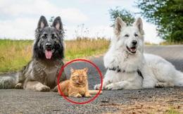 """""""Tôi cứu thằng mèo về nuôi cùng lũ chó, rồi nó quên mình là ai luôn"""": Chuyện về con mèo tưởng mình là chó đang gây sốt mạng xã hội"""