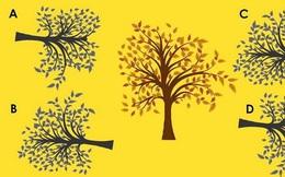 Thử tài tinh mắt 10 giây: Đâu là bóng của cái cây ở giữa?