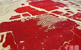 """Ảnh hiếm về """"đại dương đỏ"""" đẹp đến mê người tại vùng đất trồng ớt nổi tiếng Trung Quốc"""