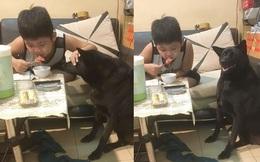 """Sợ chó cưng """"đau lòng"""", cậu bé vừa ăn xúc xích vừa có hành động khiến tất cả không thể nhịn cười"""