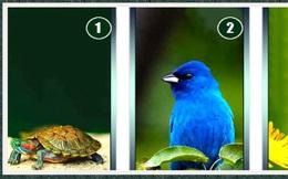 Loài động vật bạn thích tiết lộ nguồn năng lượng đang chảy trong bạn: Tích cực hay tiêu cực?
