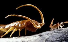 Khoa học 'đập hộp' hang động tách biệt khỏi thế giới suốt 5 triệu năm, và đây là những gì được tìm thấy
