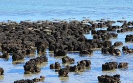 Trước khi có oxy, các dạng sống đầu tiên trên Trái đất đã hít thở chất độc chết người này