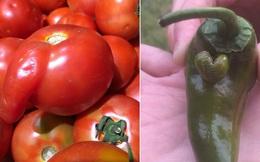 """Những lần dân mạng kinh ngạc trước vẻ ngoài độc lạ của các loại trái cây, quả là bàn tay """"mẹ thiên nhiên"""" tạo ra có khác!"""