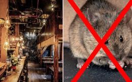 Sốc nặng khi vừa ăn xong có con gì 'bò nhúc nhích' lên người, đến lúc hỏi thì nhân viên trả lời: Nhà hàng em nhiều chuột lắm!