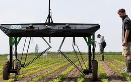 Clip: Cận cảnh chú robot AI làm việc như những người nông dân thực thụ