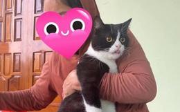 Người phụ nữ ôm mèo trở về nhà sau trận đại hồng thủy, biểu cảm của con vật và câu chuyện phía sau gây xúc động