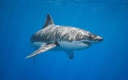 Video: Bạch tuộc khổng lồ phục kích, biến cá mập thành bữa ăn trong nháy mắt