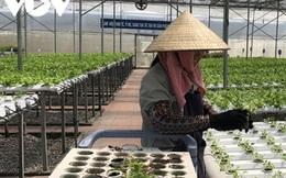 Trung Quốc tăng cường nhập khẩu nông sản từ Việt Nam