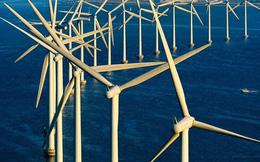 Vì sao nhiều 'đại gia' điện gió phải giảm 70-80% công suất?