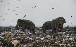 """7 ngày qua ảnh: Voi hoang dã kiếm ăn tại bãi rác vì """"cạn"""" đất sống"""