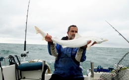 Lần đầu tiên cá mập bạch tạng xuất hiện ở Anh