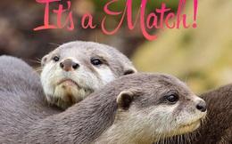 Chú rái cá tìm được 'real love' qua web hẹn hò khiến anh em loài người ghen tị cực độ